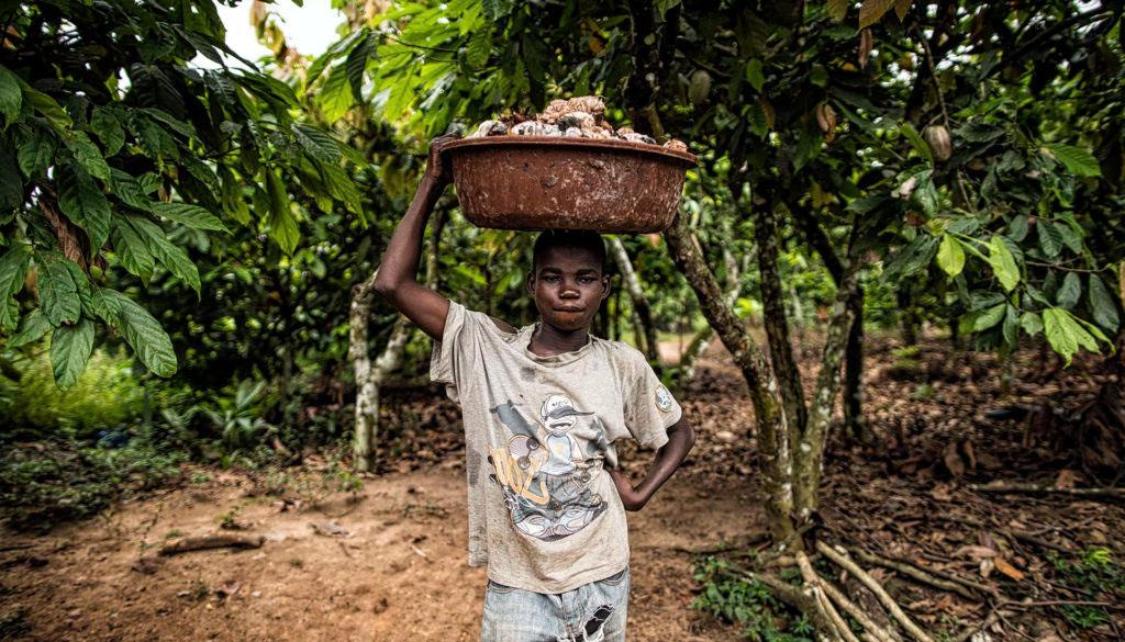 Eerlijke cacao